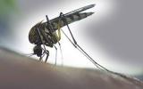 http://www.crazyenews.com/detail-info/description/bnctMzkwNTM/news/Novel blood test may detect Zika more accurately